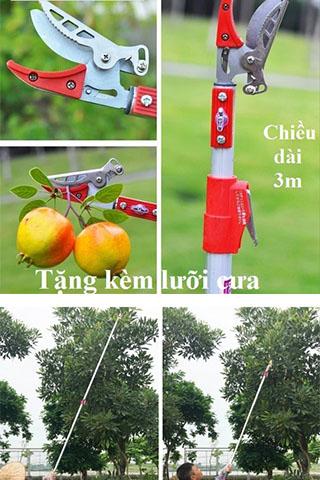 Kéo hái hoa quả trên cao và cưa cành cây dài 3m