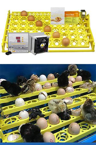 Máy ấp trứng Ánh Dương P100 có khay đảo trứng gà tự động 54 quả